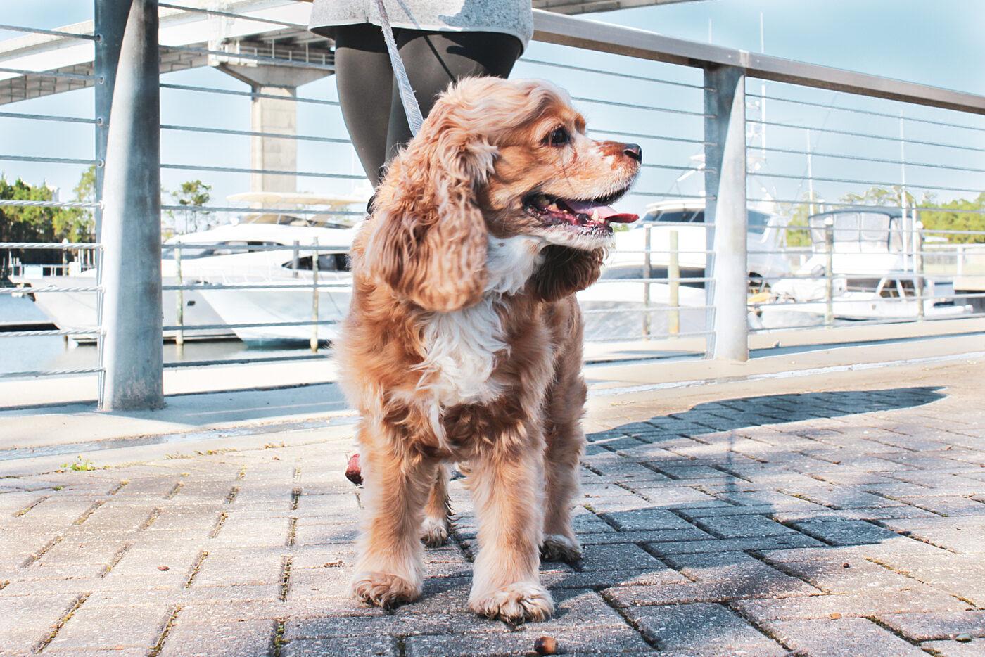 The Wharf Orange Beach Pet Etiquette Rules